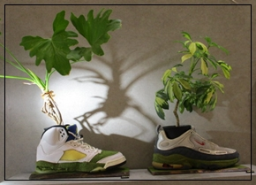 Artist - SHOETREE 杉本 浩介 -